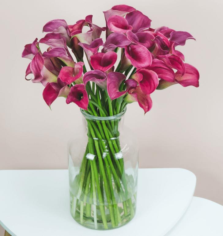 """33 Calla """"PinkBlush"""" für 24,98€ inkl. Lieferung zum Wunschtermin"""