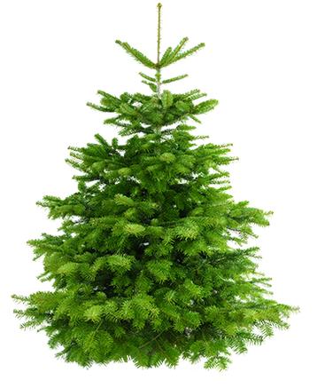 Weihnachtsbäume mit -33% nach Hause geliefert, z.B. Nordmanntanne für 27,65€