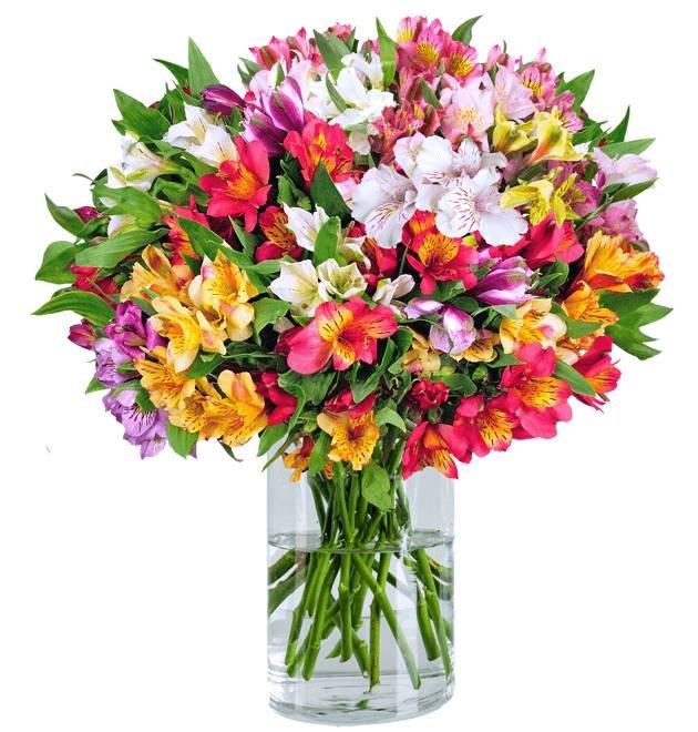 22 Inkalilien im Strauß mit bis zu 200 Blüten für 24,98€ inkl. Versand + Gratis Vase