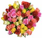 Blume Ideal: Blumenstrauß mit 50 bunten Rosen für 24,98€ inkl. Versand