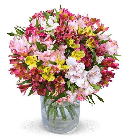 44 Inkalilien mit bis zu 400 Blüten für 24,98€ inkl. Versand