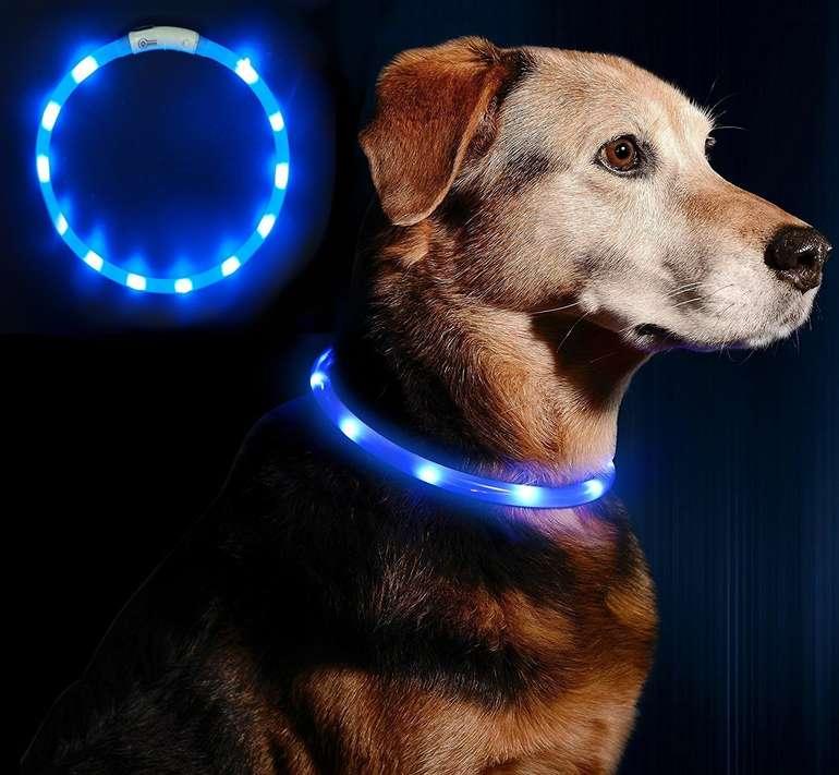 Anicoll LED-Leuchthalsband für Hunde (wiederaufladbar) zum Preis von 5,60€ mit Primeversand