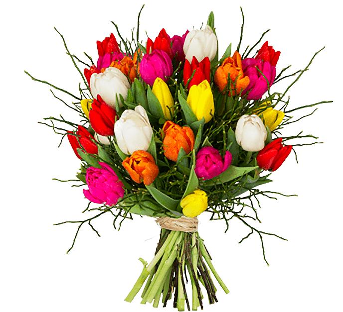 """Tulpenstrauß """"Modern Love"""" - 15 Tulpen aufgebunden mit Heidelbereen für 20,15€"""