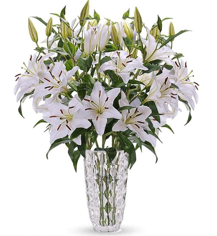 18 weiße Lilien mit bis zu 50 XXL Blüten für 24,98€ inkl. Versand