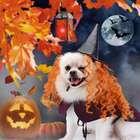 Legendog Halloween Hunde Kostüm Set für 3,29€ inkl. Prime Versand (statt 11€)
