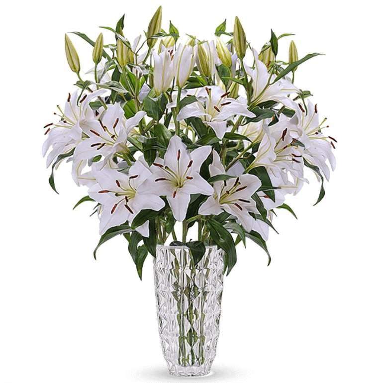 24 weiße Lilien mit XXL Blüten für 23,94€ inkl. Versand