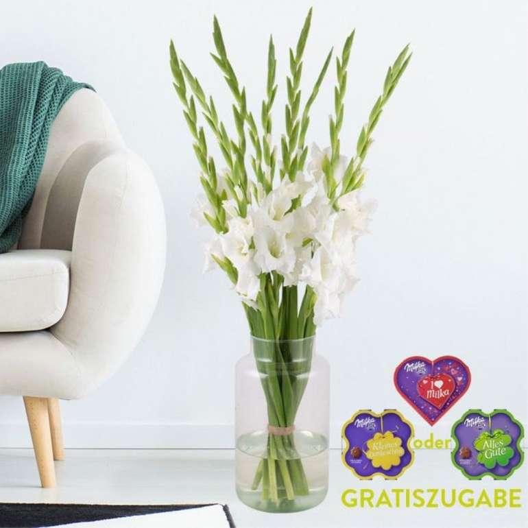10 weiße Gladiolen + gratis Milka Pralines für 19,90€ inkl. Versand
