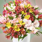 37 Inkalilien im Strauß mit bis zu 300 Blüten für 22,98€ inkl. Versand