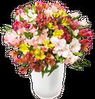 41 Inkalilien im Strauß mit bis zu 300 Blüten für 22,98€ inkl. Versand