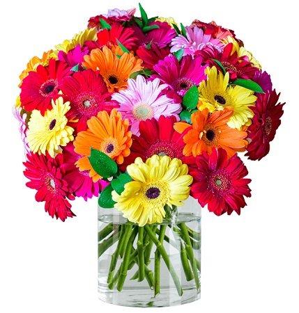43 bunte Gerbera Blumen mit 50cm Stiellänge für 22,98€ inkl. Versand