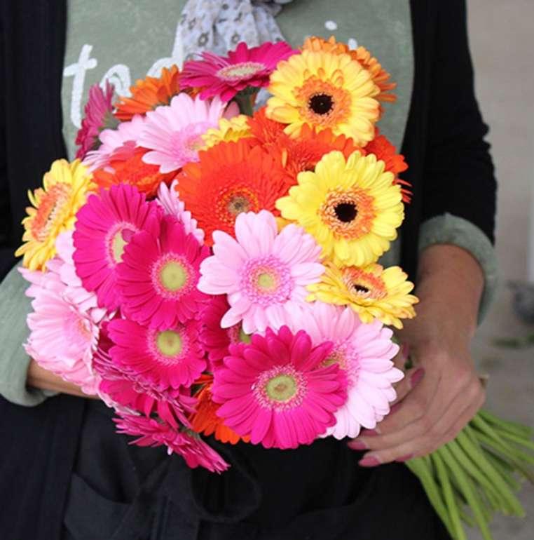 41 bunte Gerbera Blumen mit 50cm Stiellänge für 24,98€ inkl. Versand