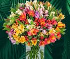 44 Inkalilien im Strauß mit bis zu 400 Blüten für 24,98€ inkl. Versand